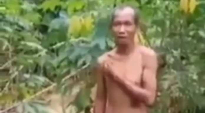 Kakek tertangkap pemilik kebun mencuri singkong.