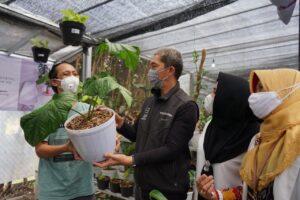 Pemkot Dorong Pasar Tanaman Hias Minaqu Home Nature